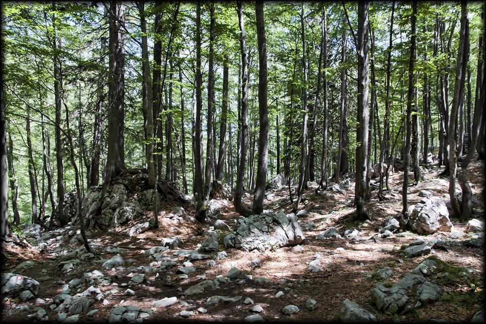 Poplesavanje med koreninami in kamenji