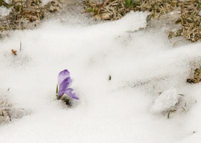Sneg ga je presenetil