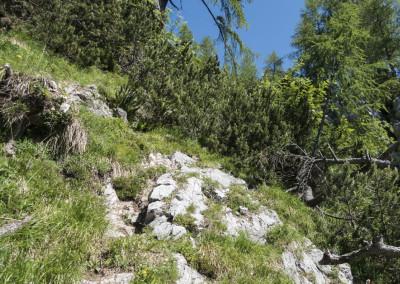 Začetek poti poteka malo po gozdu in malo po rušju