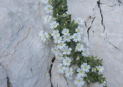 Cvetlična greda